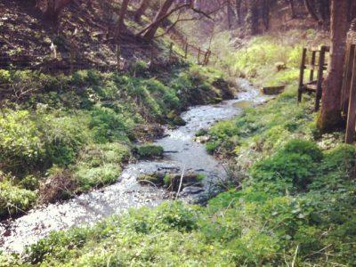 Stream in Chiseldon