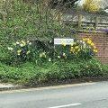 Roadside flowers Chiseldon