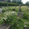 Graveyard in Summer