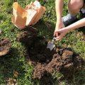 Trowel to dig bulbs Chiseldon