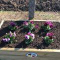 October flower box Chiseldon