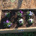 Flower box Chiseldon