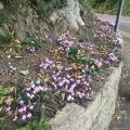 Flowers on corner, Chiseldon