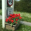 Flowers and 30 mph sign