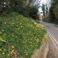 Spring roadside flowers