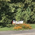 Orange flowers and sign