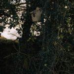 bird box Chiseldon