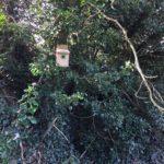 Bird box 2