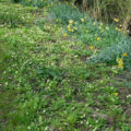 Profuse woodland flowers