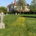 Yellow swathe of flowers, graveyard