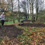Millennium Wood Bulb Planting