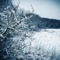 snow scene Chiseldon
